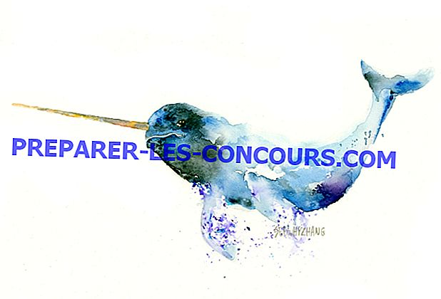 Les aquarelles fantaisistes de l'artiste attirent l'attention sur la conservation